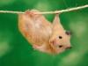 Bad_Hamster