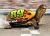 Dynamic Turtle